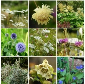 Quirky Bird Top 100 Plants